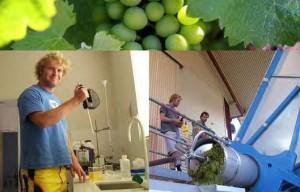 Wijnboer uit Australië
