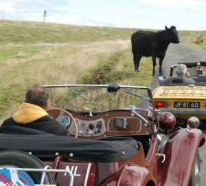 Onverwacht een loslopende koe op de weg waar klassiekers rijden in Schotland