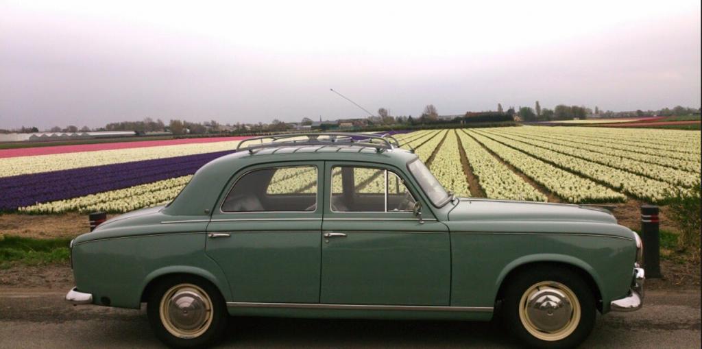 Peugeot 403 uit 1958 met op de achtergrond bollenvelden met hyacinten