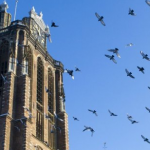 Dordrecht Grote Kerk met vogels